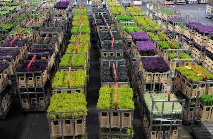 Flexible cooperation pivotal for Dutch success in global flower