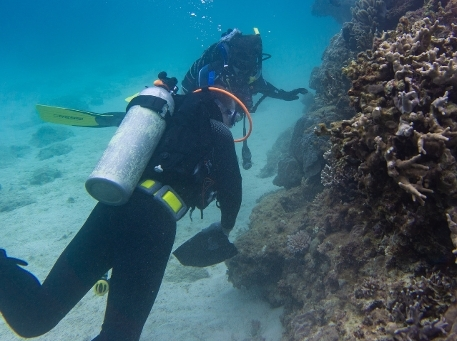 Researchers examining corals underwater